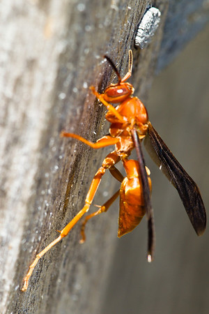 Wasp on wood