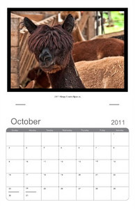 Kings Creek Alpacas: Have a favourite hobby, prized animals, cherished grand children. Let Sellick Event Photography take the images and turn them into a one of a kind gift.