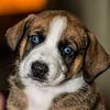 puppies_181tnc