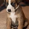 puppies_71tnd