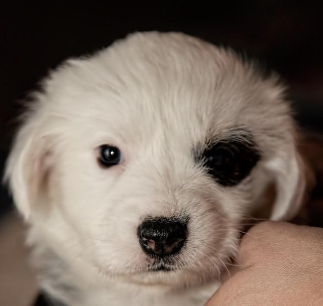 puppies_78tnd