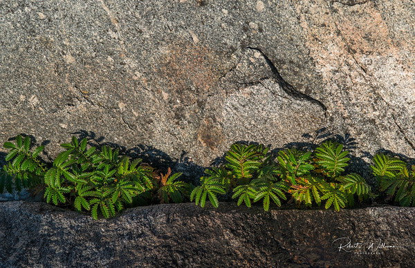 Plants in a Rock Crack
