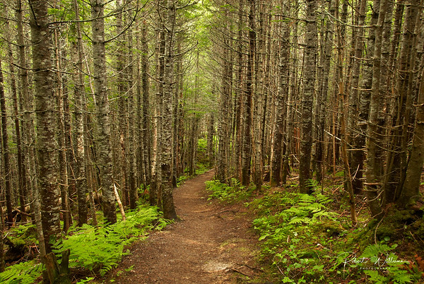 Southeast Brook Falls Trail