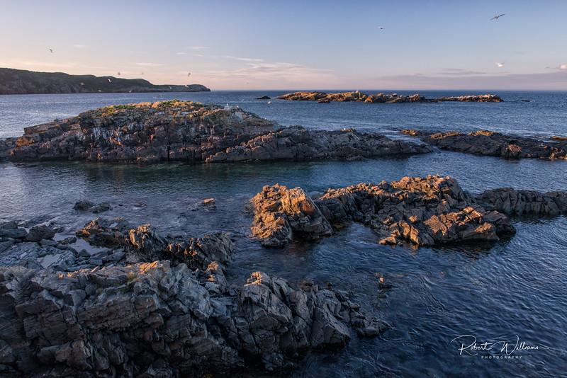 Island with nesting Terns, Elliston, Newfoundland