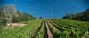AGRICULTURAL PHOTOGRAPHY - SONOMA VINYARD/WINE