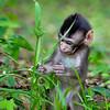 Curious little guy