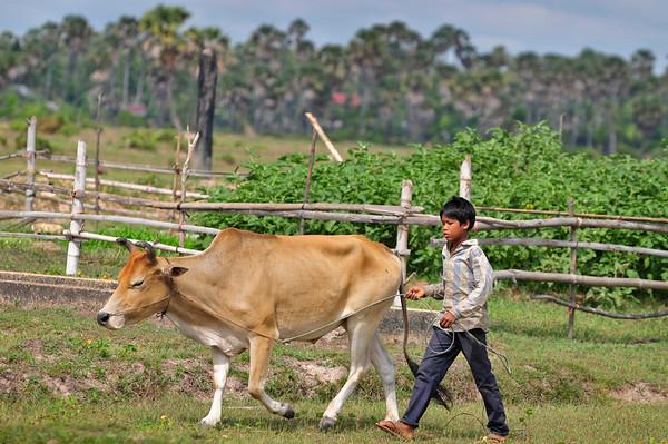 Young farm boy