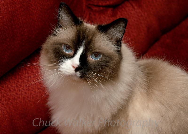 Beautiful eyes...  :-)\