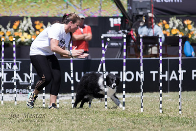 2017_Purina_Competition-15