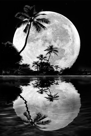 Supermoon and palms 2016 reflection BW