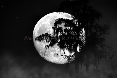 Moon over the glades 1307a  BW