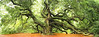 Angel Oak 2502