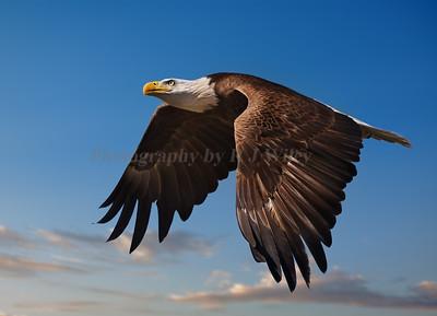 Eagle 7733 a