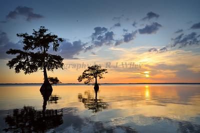 Sunset Blue Cypress Lake1391c
