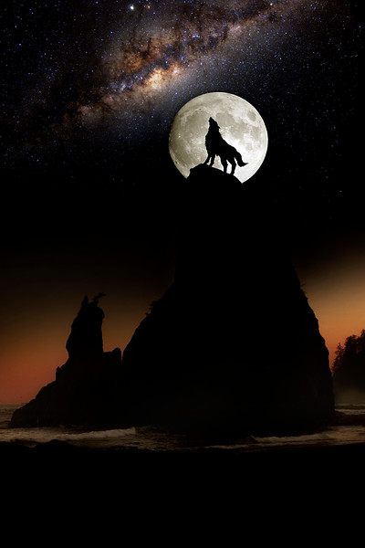 IMG_9395 wolf