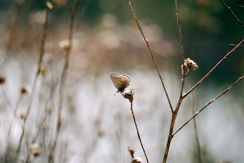 Moth on twig.