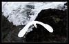 Great (Egret) Escape<br /> <br /> A great egret leaves its hunting spot<br /> to avoid the crashing ocean waves.<br /> <br /> Pt. Lobos State Reserve<br /> Carmel, California<br /> <br /> 15-JAN-2011