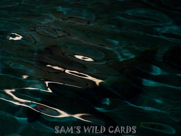 Sam's Wild Cards-Nature