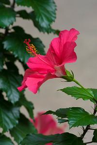 San Antonio Botanical Garden-10
