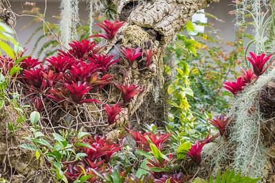 San Antonio Botanical Garden-5