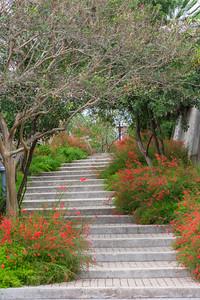 San Antonio Botanical Garden-16
