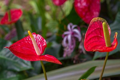 San Antonio Botanical Garden-7