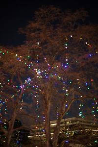 2014-12 San Antonio Christmas Lights (4 of 58)