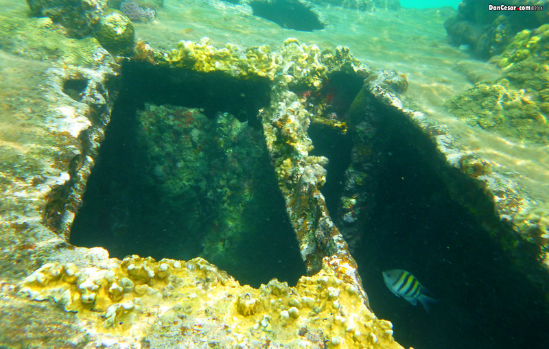 Shipwreck near Dog Island