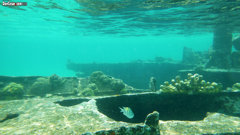 Sunken ship near Dog Island