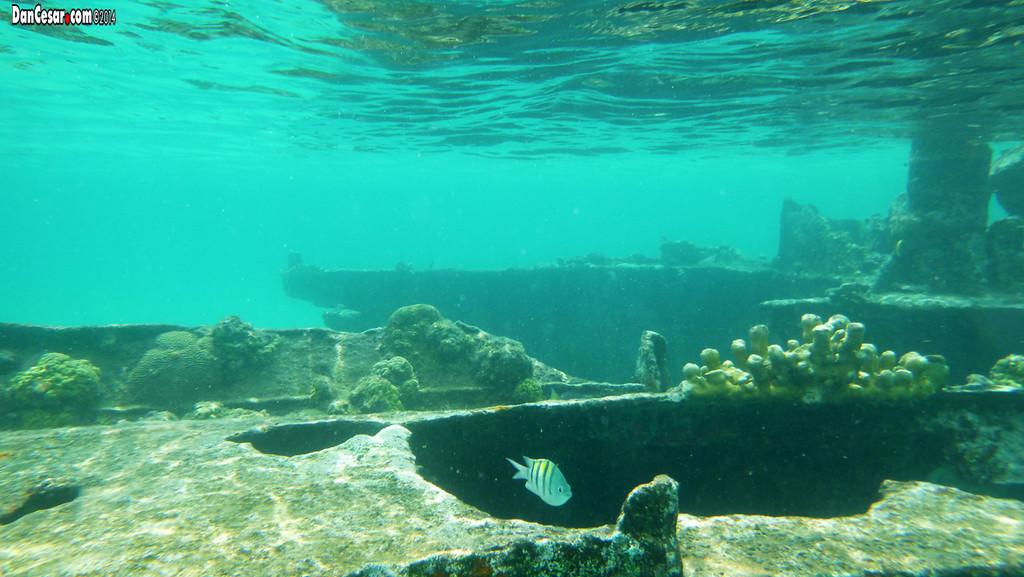 Sunken ship near Dog Island