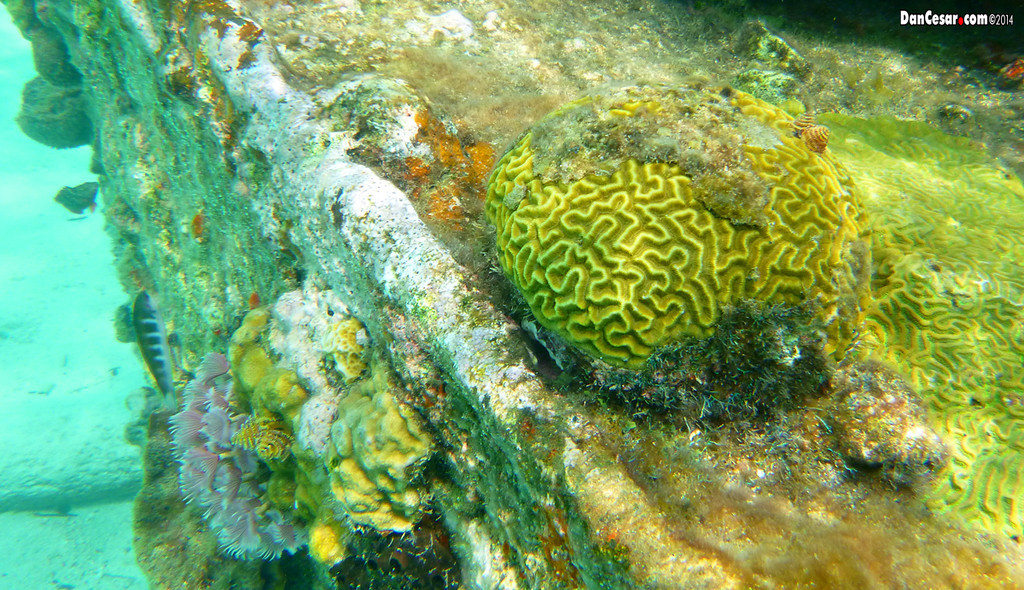 Coral on the Shipwreck