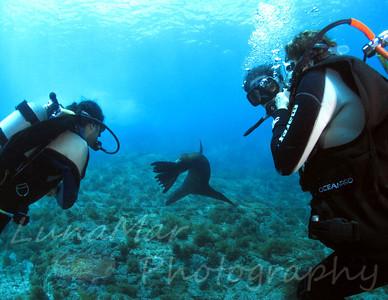 Sea Lion & Richardo_Daniela_Eugenia