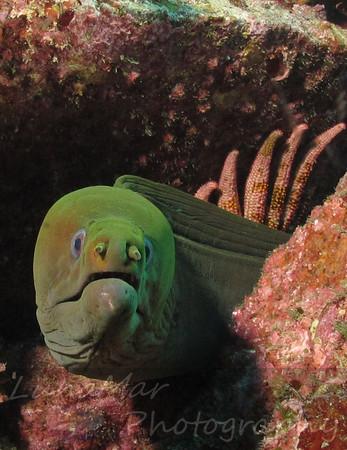 Awesome Eel