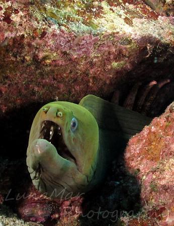 Eel Teeth