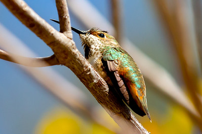 This is a hummingbird!!