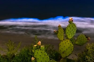 Cuddy As a Cactus