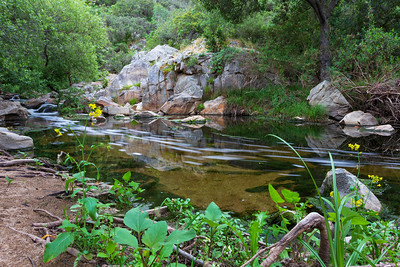 Escondido Creek in the Elfin Forest