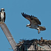 Osprey Nest<br /> Pepper Park, National City