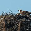 140407-Osprey Nest-002