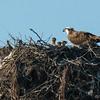 140407-Osprey Nest-001