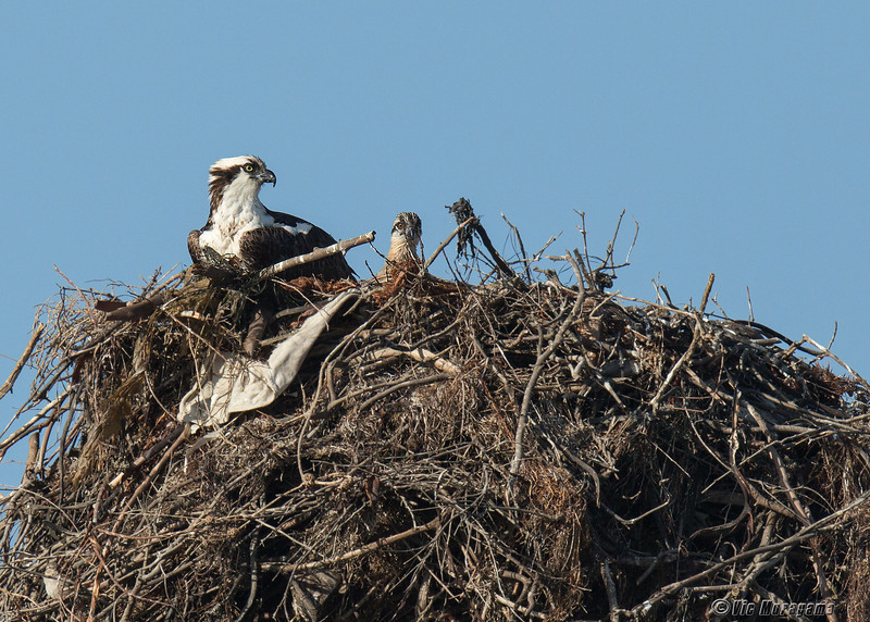 140414-Osprey Nest-003