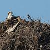 140414-Osprey Nest-005