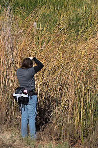 Rae Costa shooting the cattails
