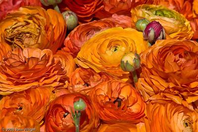 April—Carlsbad Flower Fields