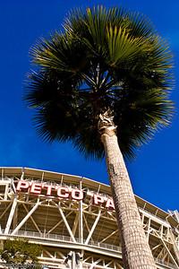 PETCO Palm Tree