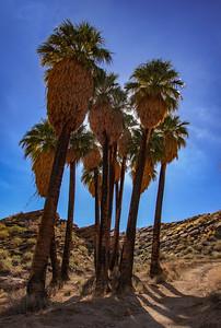 Palm Springs - Murray Canyon Hike - Jan 6, 2017