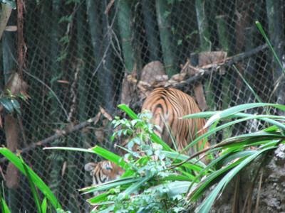 San Diego Zoo 2012-08-16