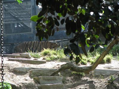 San Diego Zoo 2012-06-21