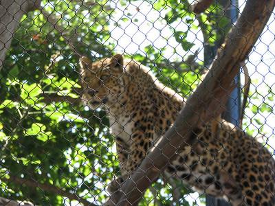 San Diego Zoo 2012-06-29