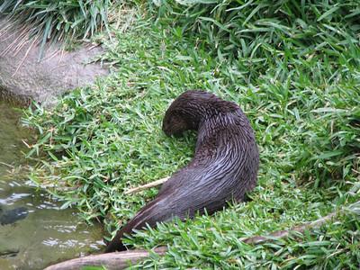 San Diego Zoo 2012-07-04